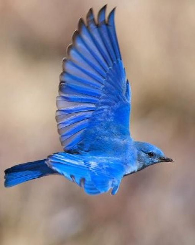 bleu-8.jpeg