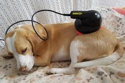 Bild Lasertherapie beim Hund