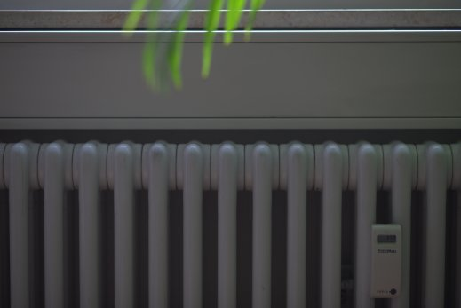 heizung-pflanze-heizung-notdienst-frankfurt-24h.jpg
