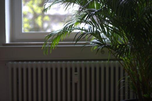 pflanze-heizung-heizungsnotdienst-hannover.jpg
