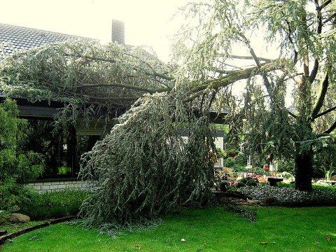 800px-Sturmschaden_vom_Baum_b.jpg