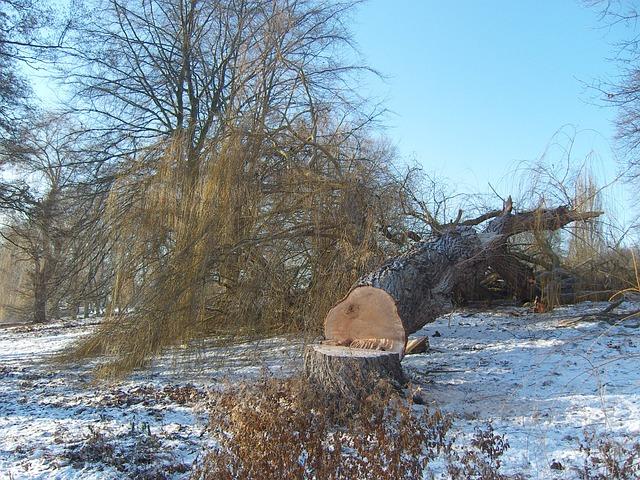 winter-283962_640.jpg