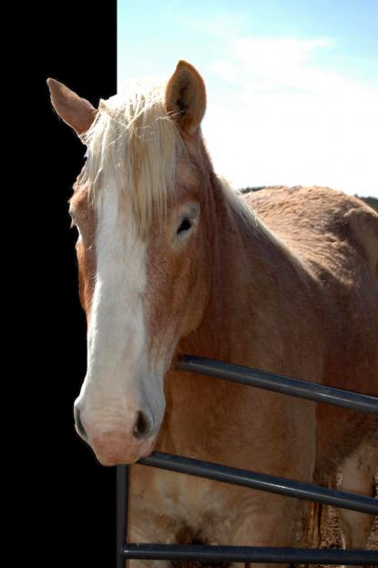 petting zoo Horse