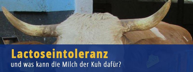 Lactoseintoleranz - und was kann die Milch der Kuh dafür?