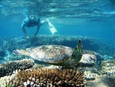 Ningaloo Reef Turtles