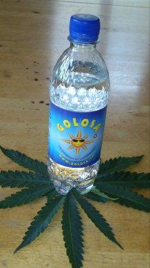 GOLOSA 0,5lt-Flasche