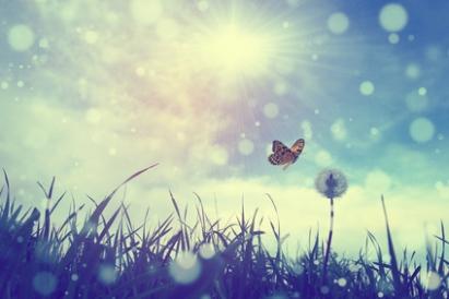 Butterfly_and_dandelion.jpg