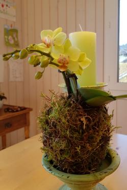 Moos-Kugel-Phalaenopsis-Orchidee.png