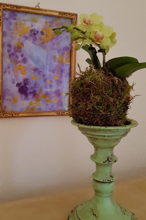 Mooskugel-Phalaenopsis-Deko-idee_2.png