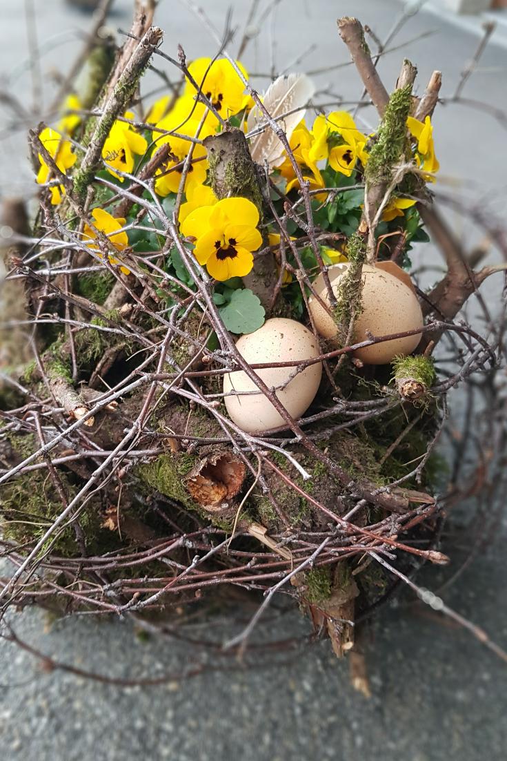 Natur-Dekoration-Fruehling-fuer-draussen-mit-Viola-Cornuta-Pflanze.png
