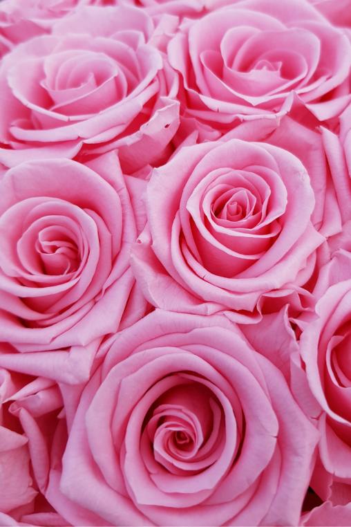 stabilisierte-Rosen-rosa-Rosen-Box.png